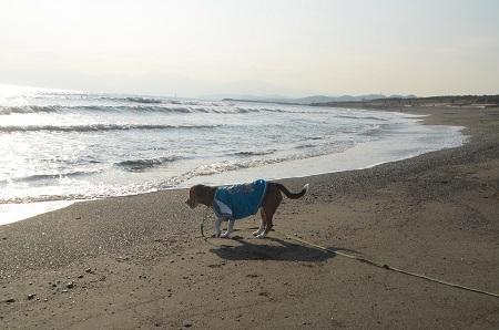 20140222茅ヶ崎西浜11