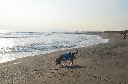 20140222茅ヶ崎西浜10