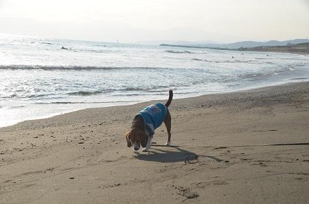 20140222茅ヶ崎西浜08