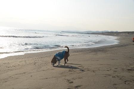 20140222茅ヶ崎西浜07