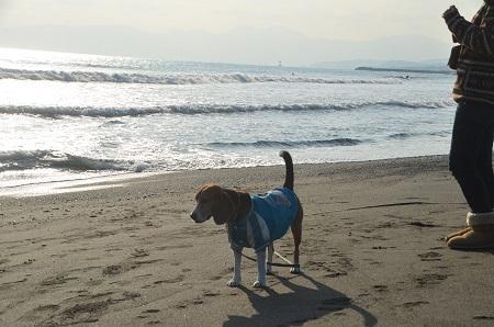 20140222茅ヶ崎西浜14