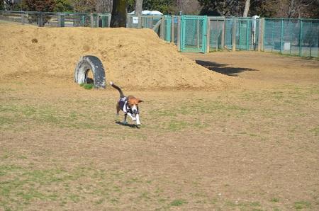 20140306北総ドッグラン04
