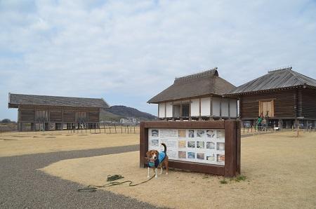 20140309平塚官衞遺跡06