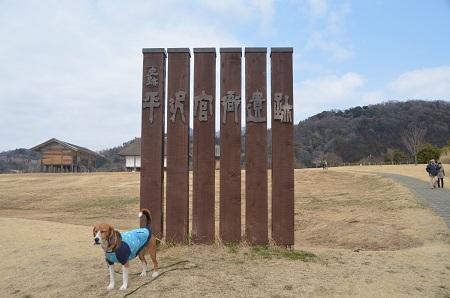 20140309平塚官衞遺跡03