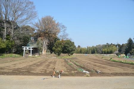 20140316 妙見神社 多古北中10