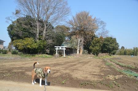 20140316 妙見神社 多古北中09