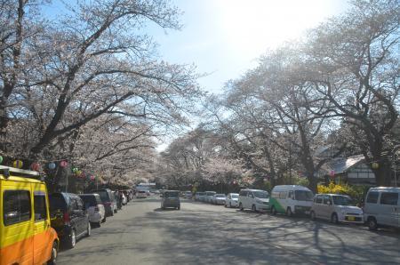 20140331小林牧場の桜06
