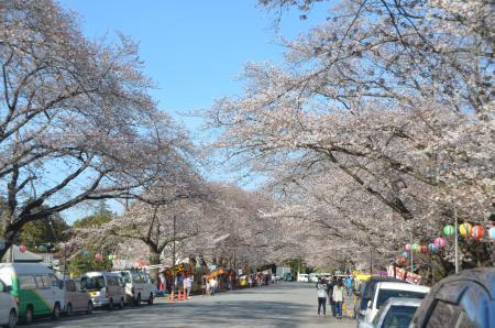 20140331小林牧場の桜01