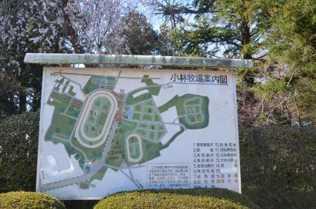 20140331小林牧場の桜12