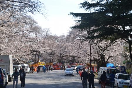 20140331小林牧場の桜11