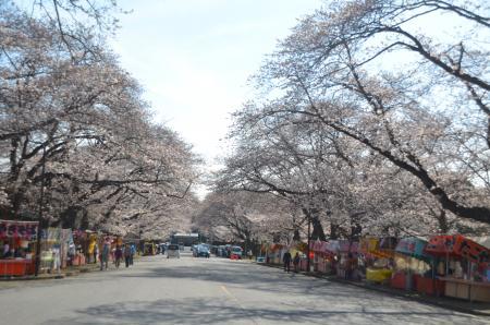 20140331小林牧場の桜09
