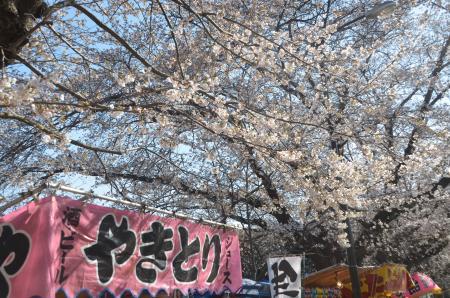 20140331小林牧場の桜07