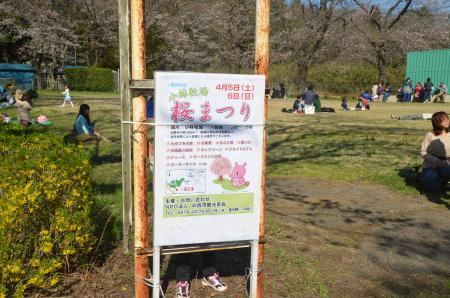 20140331小林牧場の桜18