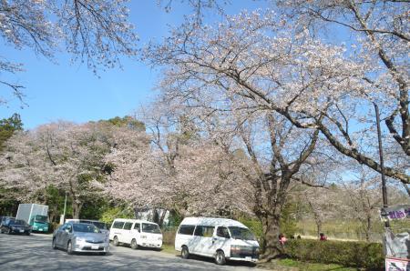 20140331小林牧場の桜15