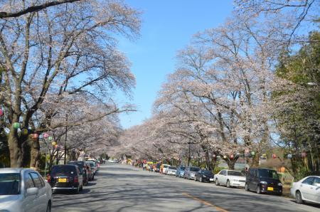 20140331小林牧場の桜23