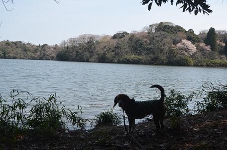 20140401雄蛇ヶ池15