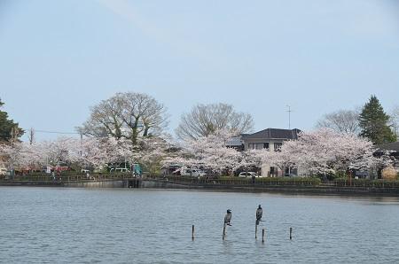20140401八鶴湖05