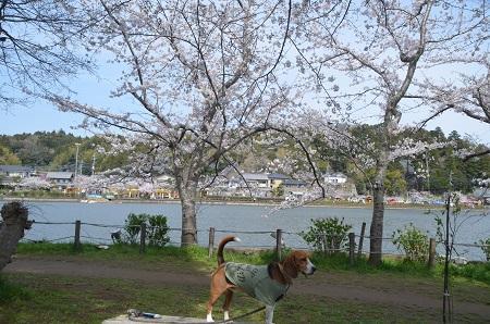 20140401八鶴湖03