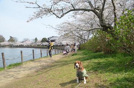 20140401八鶴湖09