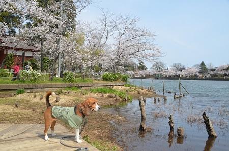 20140401八鶴湖08