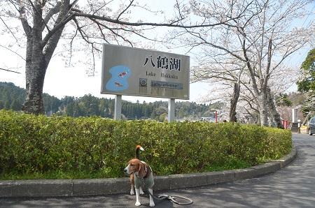 20140401八鶴湖15