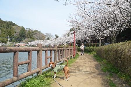 20140401八鶴湖12