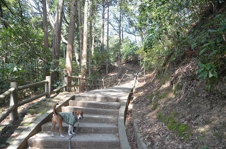 20140401天王台公園06