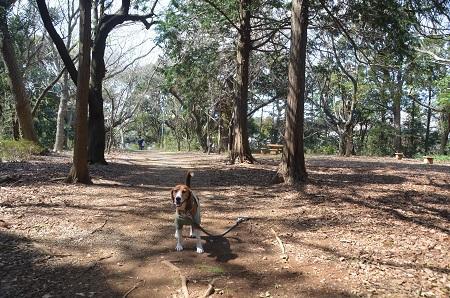 20140401天王台公園09