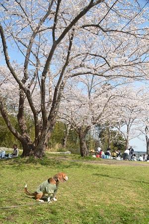 20140401天王台公園17