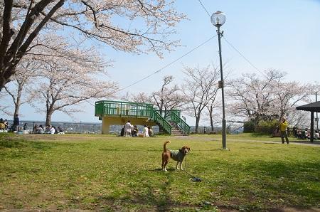 20140401天王台公園16
