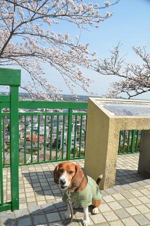 20140401天王台公園19