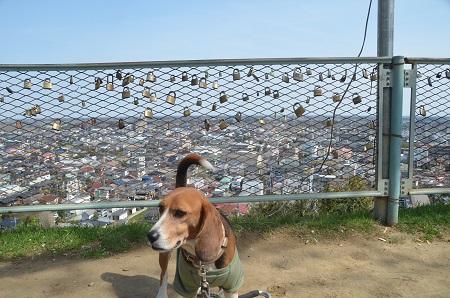 20140401天王台公園25
