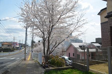20140402佐倉城址公園02