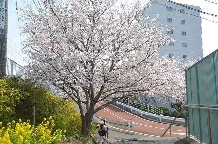 20140402佐倉城址公園01
