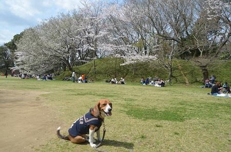 20140402佐倉城址公園12