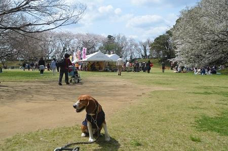20140402佐倉城址公園11