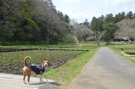 20140402佐倉城址公園09