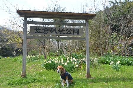 20140402佐倉城址公園08