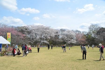 20140402佐倉城址公園15