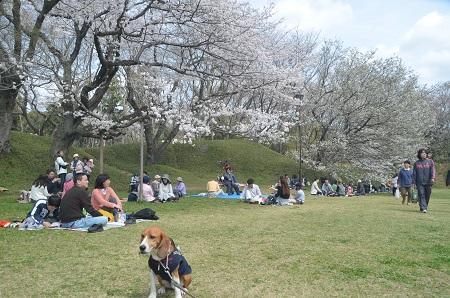 20140402佐倉城址公園14