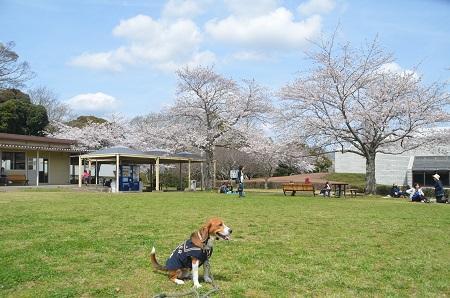 20140402佐倉城址公園29
