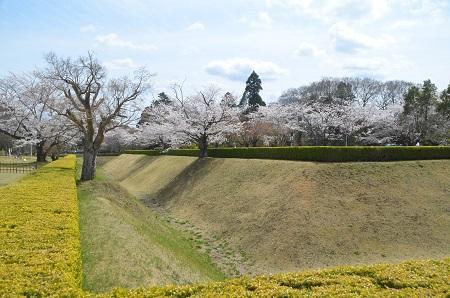 20140402佐倉城址公園32