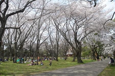 20140402佐倉城址公園41