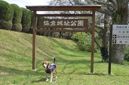 20140402佐倉城址公園40