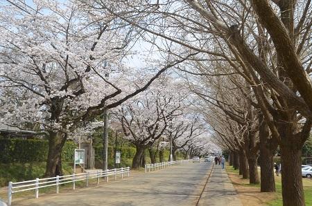 20140402佐倉城址公園47