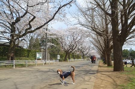 20140402佐倉城址公園48