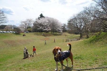20140402佐倉城址公園46