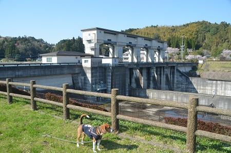 20140407高滝ダム05