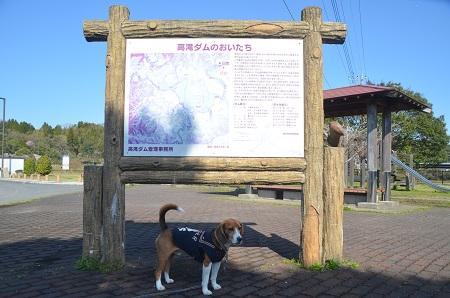 20140407高滝ダム03