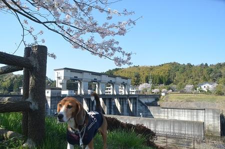 20140407高滝ダム09